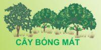 CAY BONG MAT