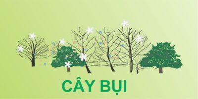 CAY BUI