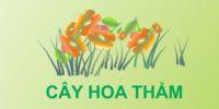 CAY HOA THAM