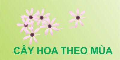 CAY HOA THEO MÙA