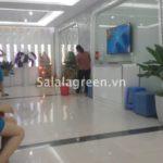 Cho thuê cây nội thất thẩm mỹ viện Kangnam