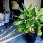 10 loại cây nội thất phù hợp cho văn phòng