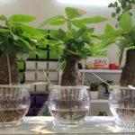 5 loại cây nội thất đẹp và bền nhất phù hợp cho văn phòng làm việc