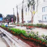Thi công cảnh quan cây xanh Vincom Plaza Việt Trì