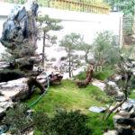 Chăm sóc cây xanh sân vườn biệt thự Long Biên