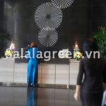 Cho thuê cây nội thất tại Lotte Hotel