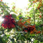 Quan điểm về phong thủy trồng cây?