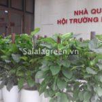 Cho thuê cây nội thất một số cơ quan nhà nước