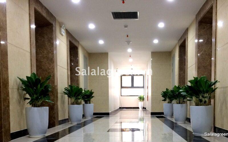 Cho thuê cây nội thất tại dự án An Bình City