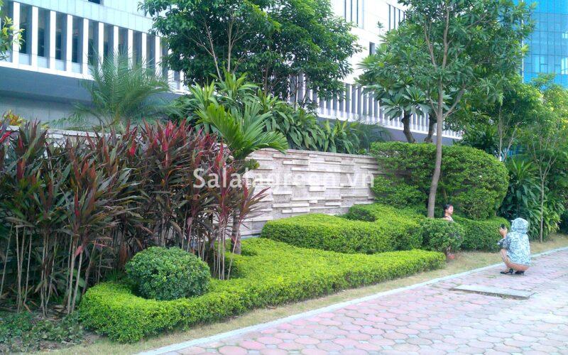 Chăm sóc cây xanh sân vườn Kangnam Hà Nội