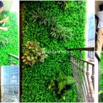 Thi công vườn tườn, Logia dự án An Bình City