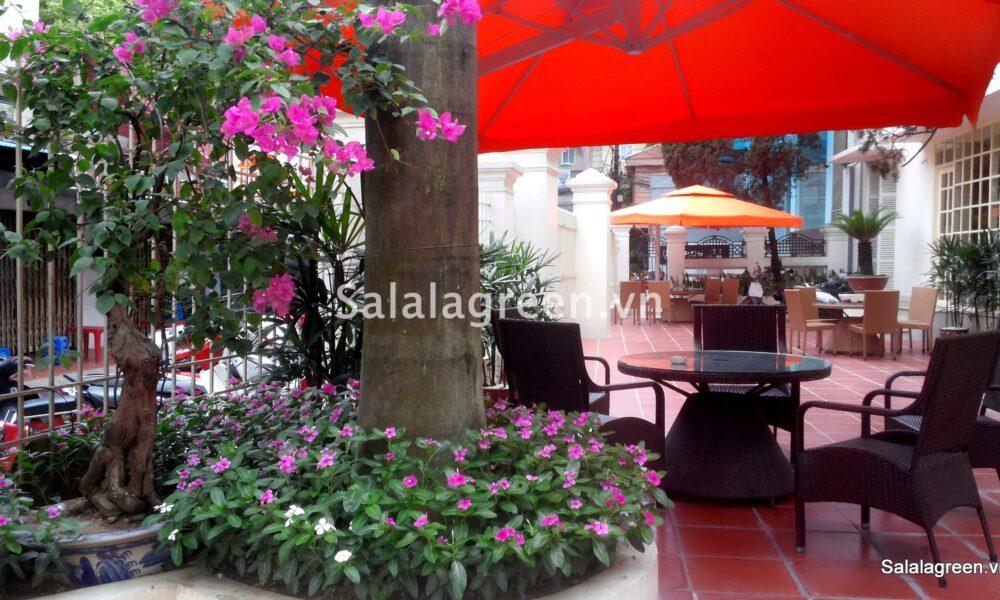 trang trí cây xanh quán cà phê