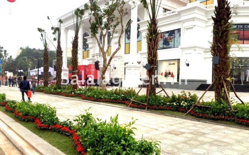 thi công cảnh quan dự án Vincom Plaza Việt Trì