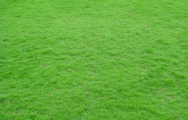 1-1-trồng-cỏ-nhật-003