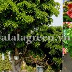 10 loại cây đón tài lộc nhiều nhất cho gia chủ