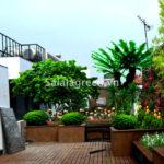 Thiết kế vườn trên mái Sơn Tây