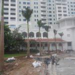 Trồng cây xanh khách sạn Deawoo Hà Nội