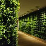 Cách chăm sóc vườn đứng hiệu quả nhất