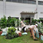 Cho thuê cây nội thất nhà máy Yamaha Nội Bài